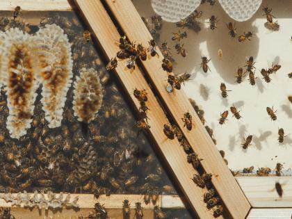 Bee Sanctuary