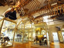 Boston Museums