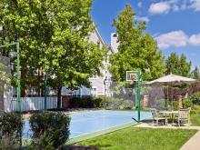 Pool and the Backyard